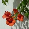 Pflanzen 13