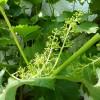 Pflanzen 16