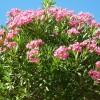 Pflanzen 24