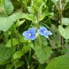 Pflanzen 26