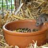 Tiere 02 Maus