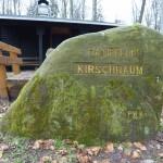 Ri077 Kirschbaum
